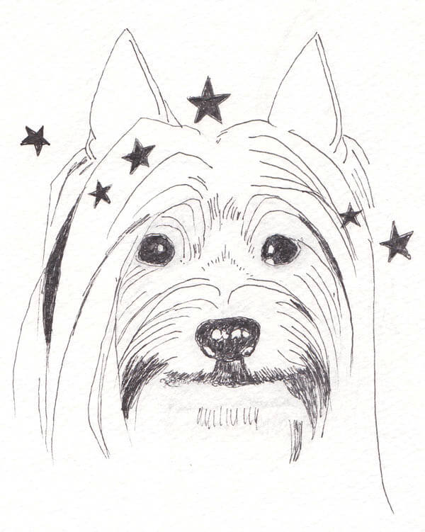 Free coloring pages of yorkie puppy for Yorkie coloring pages