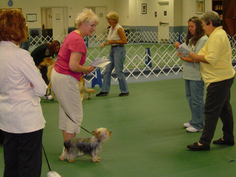This is smart Sara at her basic Obedience graduation.