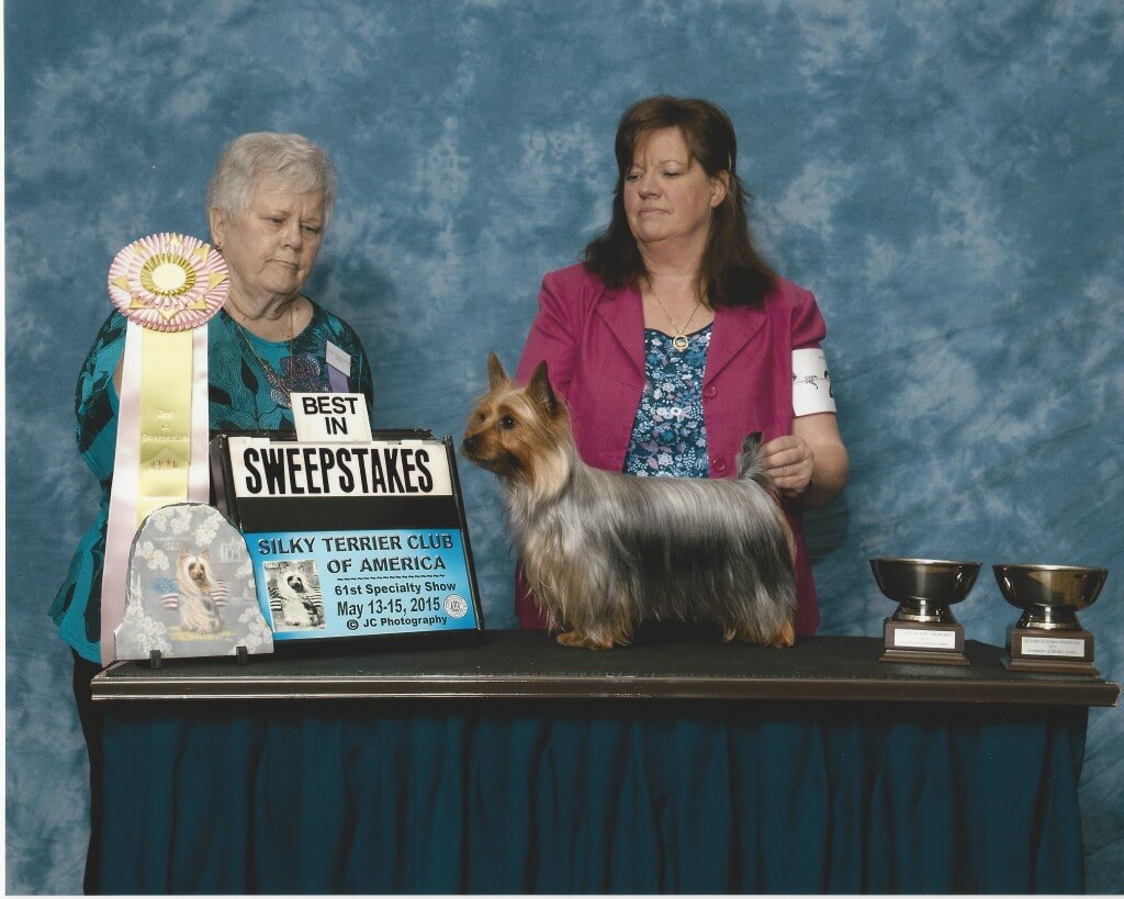 "This is Maestro's sister ""Secret"" Ch. Tessier Wyntuk Royal Intruigue, shown going Best in Sweepstakes at Nationals 2015."