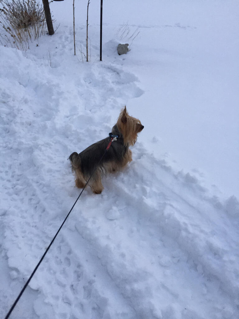 Nate in the snow